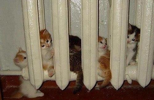 07112037_a.baa-Cats-on-warm