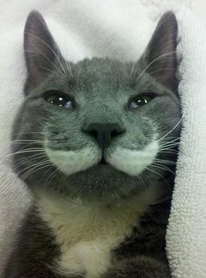 Cat-Mustache