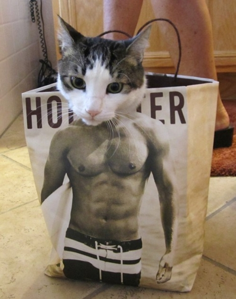 The-muscle-cat
