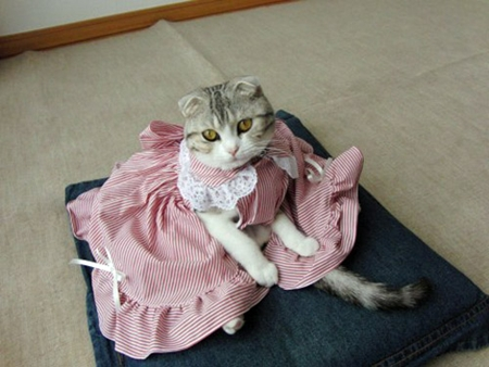 cat-dress-1