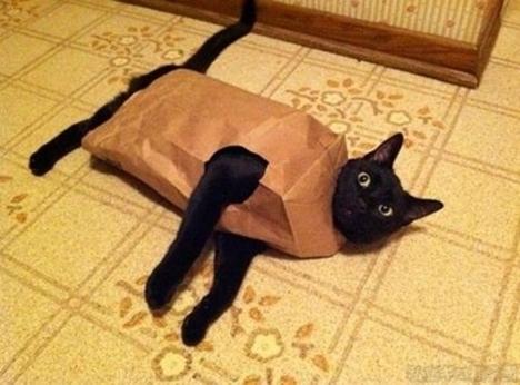 cat-paper-bag