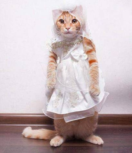 cute-cat-in-bridal-dress