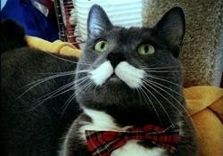 gentle-cat
