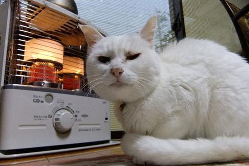 heater-cat