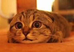 hora-cat