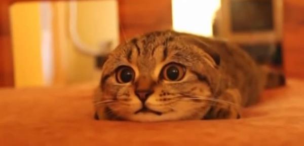 hora-cat1