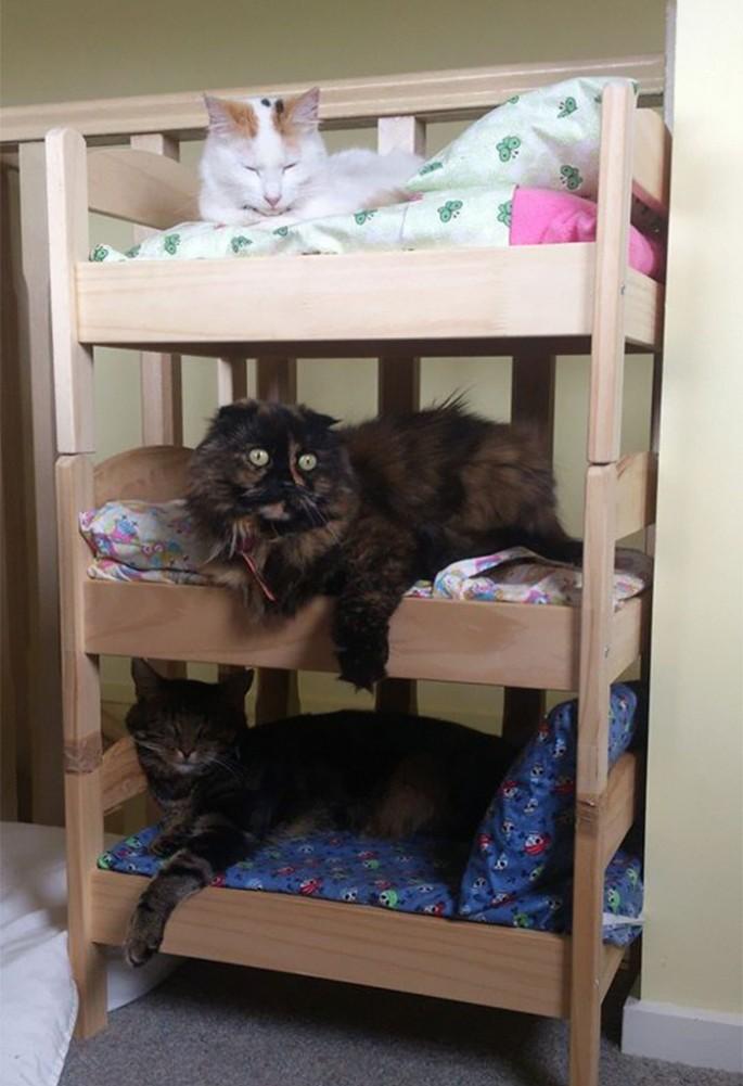 ikea-cat-bed-9-685x1001