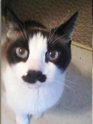 mr__mustache_cat_by_rockrooster4-d4yjhp7