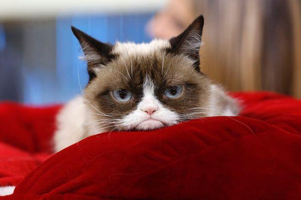 Grumpy-Cat (1)