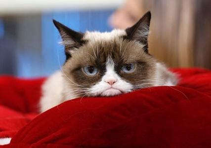Grumpy-Cat -i