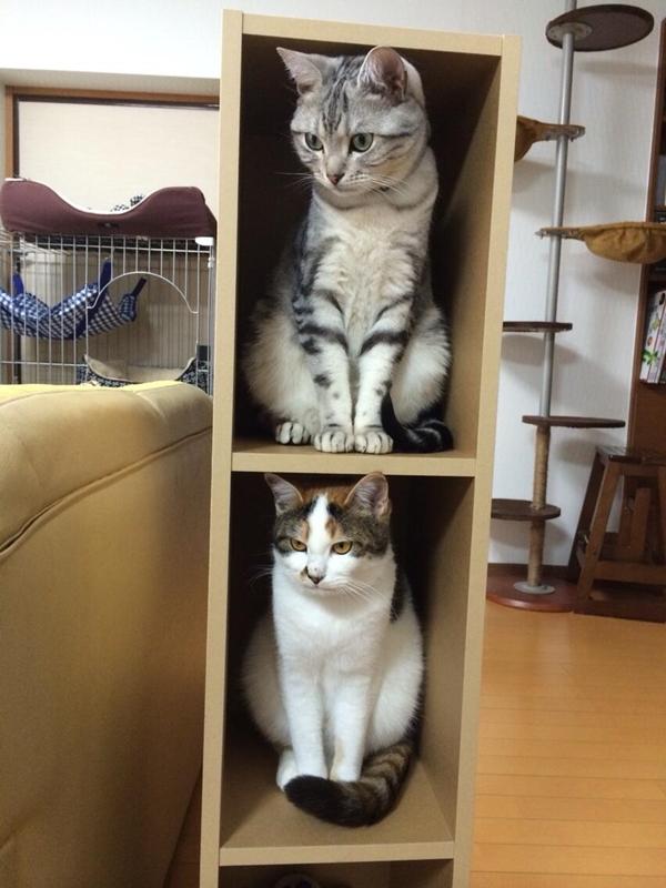 cat-tower001handmade