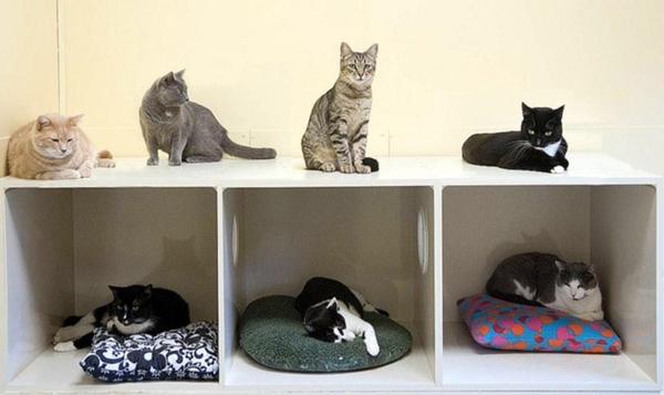 cat-tower003handmade