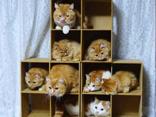 cat-tower004handmade