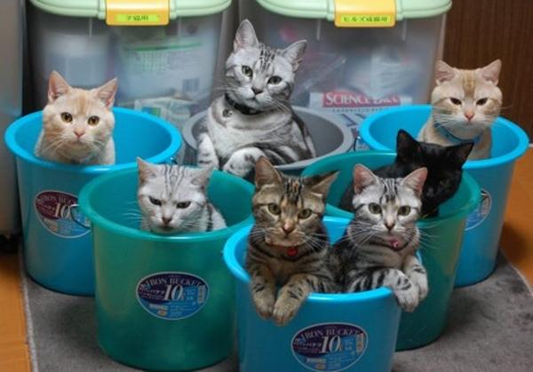 cat-tower005handmade