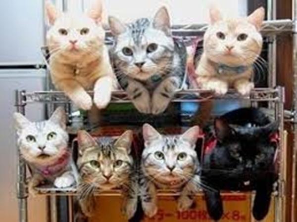 cat-tower007handmade