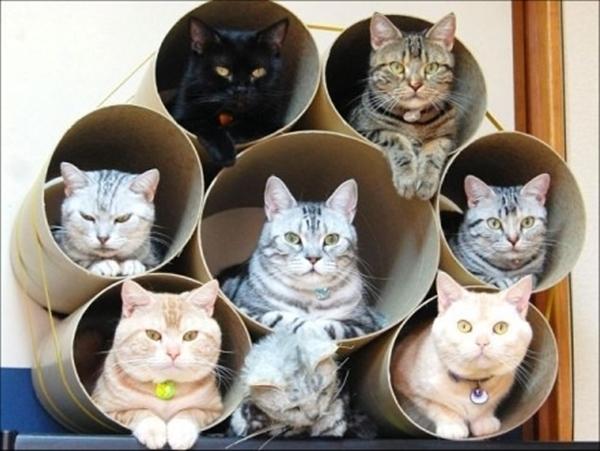 cat-tower009handmade