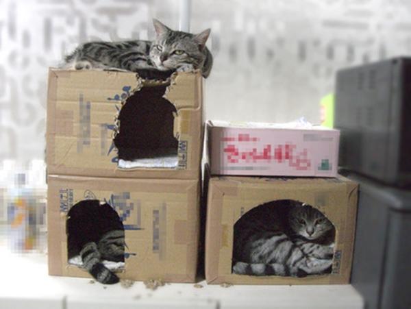 cat-tower012handmade