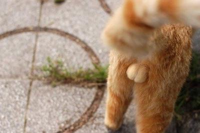 cat006balls