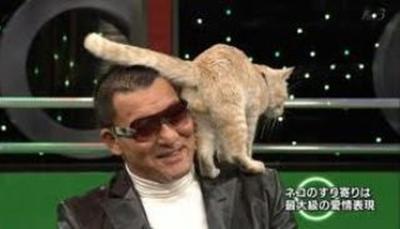 cat008balls