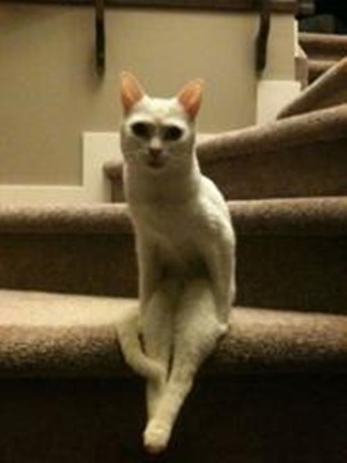 cat011sitten