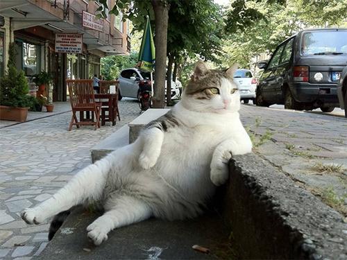 cat015sitten
