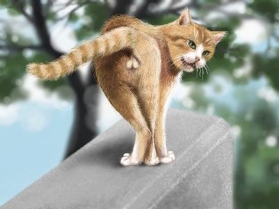 cat016balls