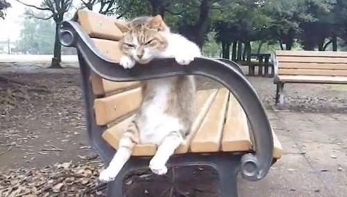 cat016sitten