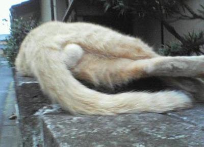 cat017balls