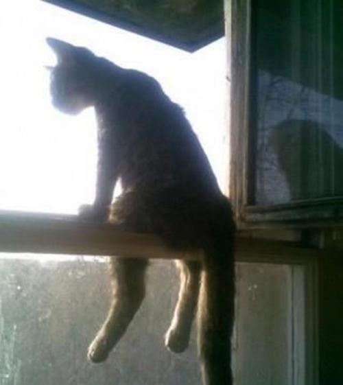 cat017sitten