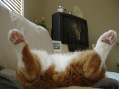 cat018balls