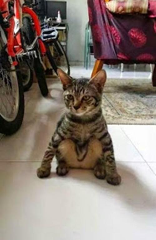 cat018sitten