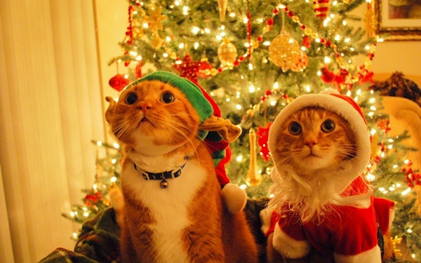 christmastree-cat-i