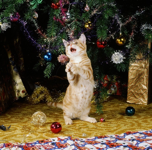 Young ginger cat playing with Christmas tree decorations