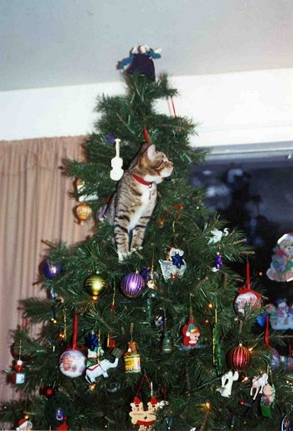 christmastree-cat10