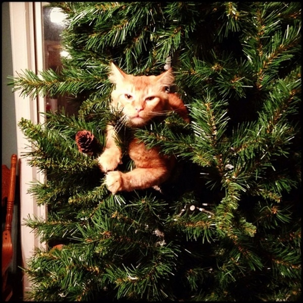 christmastree-cat11
