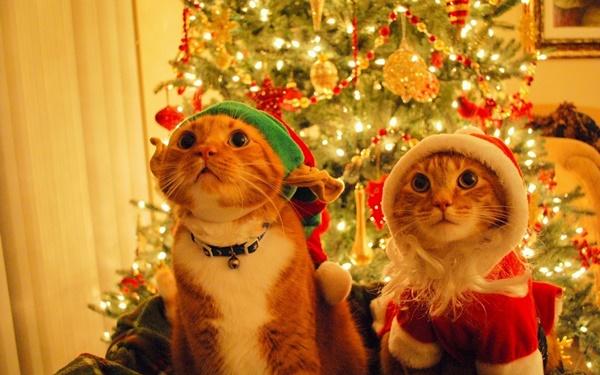christmastree-cat13