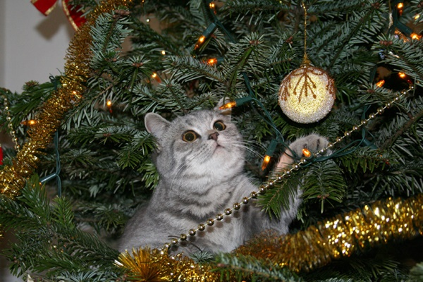 christmastree-cat14