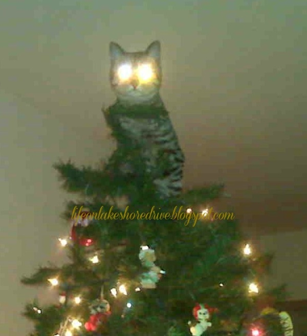 christmastree-cat15