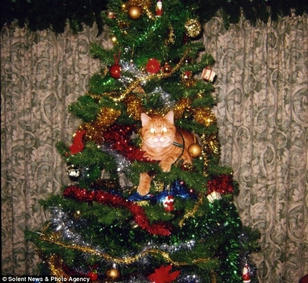 christmastree-cat16