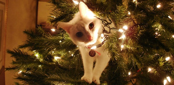 christmastree-cat17