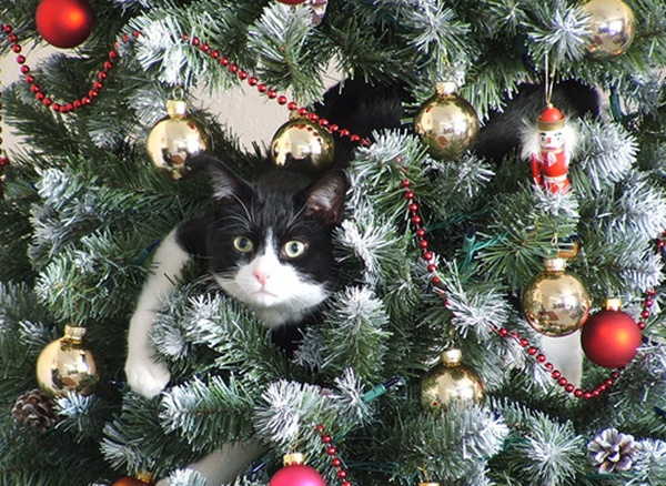 christmastree-cat18