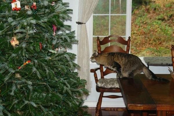 christmastree-cat19