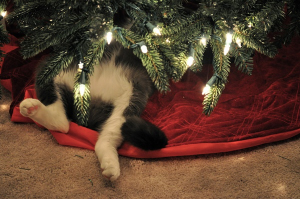 christmastree-cat2