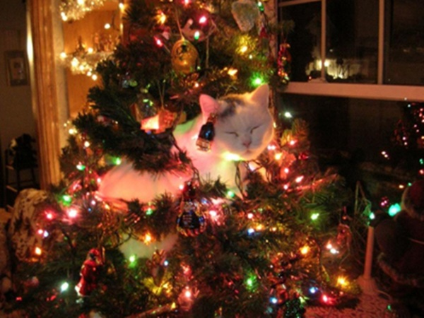 christmastree-cat20