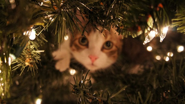 christmastree-cat3