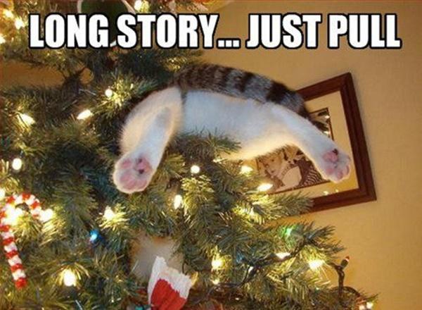 christmastree-cat4