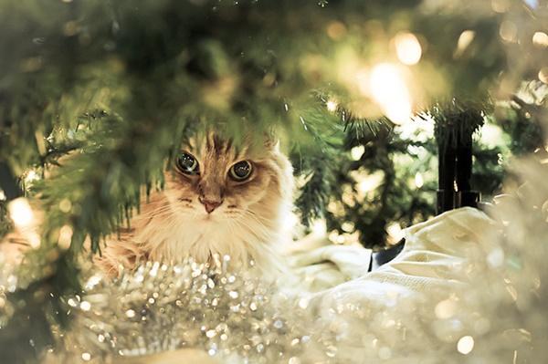 christmastree-cat5