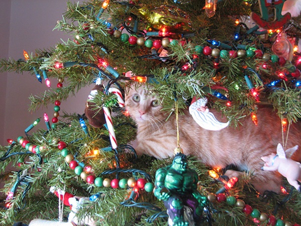 christmastree-cat6