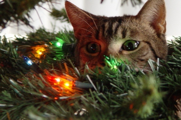 christmastree-cat7
