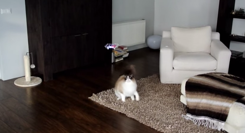 猫とドローン1